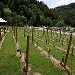 vinska-klet-mastnak17_velika